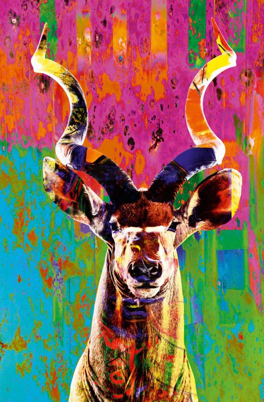 New Urban Animal 082 cut - Norbert Schäfer PhotoArt