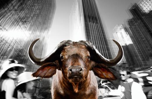 Urban Animals 04 - Norbert Schäfer PhotoArt