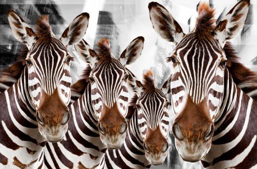 Urban Animals 07 - Norbert Schäfer PhotoArt
